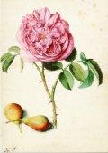 ポストカード 「植物画」