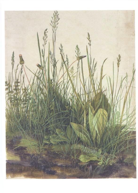 アルブレヒト・デューラーの画像 p1_31
