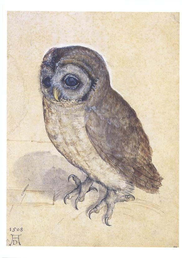 アルブレヒト・デューラーの画像 p1_10