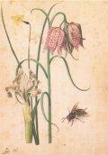 ポストカード 「植物画」 (ボタニカル・アート)